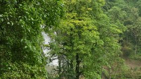 绿色树在热带森林里 影视素材