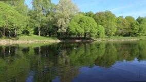 绿色树在镜子湖明亮地被反射 理想的背景 没人 股票录像