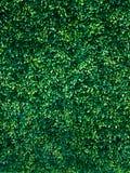 绿色树墙壁背景 库存图片