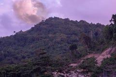 绿色树山脉天空是阴暗的 免版税库存照片