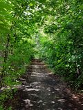 绿色树投上阴影的小森林汽车路 库存照片