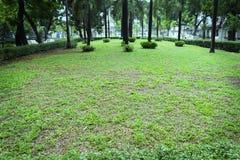 绿色树早晨在公园 免版税库存照片