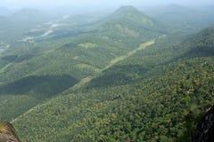 绿色树木丛生的山 库存图片