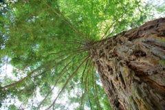 绿色树梢 免版税库存照片