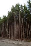 绿色树森林 免版税库存图片