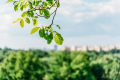 绿色树留给特写镜头被弄脏的城市地平线 免版税库存照片