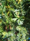 绿色树离开特写镜头和镇定的背景 库存图片