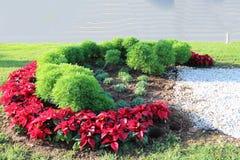 绿色树篱和红色复活节花 库存照片