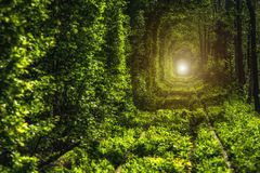 绿色树美丽的隧道  爱隧道 老被放弃的铁路线,在绿色树胡同  库存照片