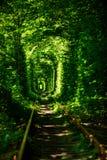绿色树美丽的隧道  爱隧道 老被放弃的铁路线,在绿色树胡同  免版税图库摄影