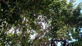 绿色树自然云彩天天空 库存照片