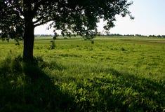绿色树荫 免版税库存图片