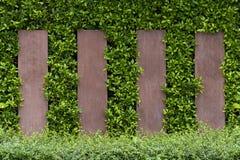 绿色树装饰墙壁和被仿造的篱芭 免版税库存图片