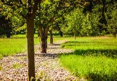绿色树连续 免版税库存照片