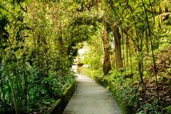 绿色树隧道段落 免版税库存图片