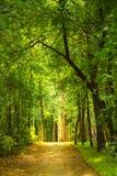 绿色树隧道,在距离的一条道路 透视框架 图库摄影