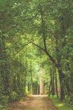 绿色树隧道,在距离的一条道路 透视框架 库存图片