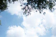 绿色树顶面在森林发光通过叶子的天空蔚蓝和太阳射线 免版税图库摄影