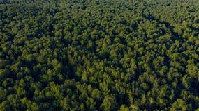 绿色树鸟瞰图在日落的 免版税库存图片