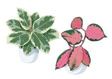 绿色桃红色在罐把树留在 向量例证