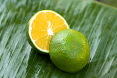 绿色桔子 免版税库存照片