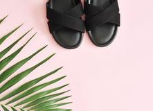 绿色棕榈叶和鞋子在浅粉红色的背景 库存图片