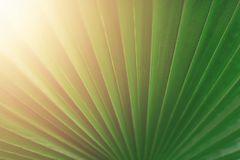 绿色棕榈叶宏指令与拷贝空间的 太阳光线影响和晴朗的bokeh 夏天、假日和旅行概念 库存图片