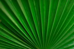 绿色棕榈叶宏指令与拷贝空间的 太阳光线影响和晴朗的bokeh 夏天、假日和旅行概念 免版税库存图片