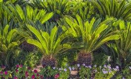 绿色棕榈庭院风景设计在海滩公园 antalya火鸡 免版税库存照片