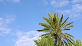 绿色棕榈树美丽的景色反对蓝色多云天空的 影视素材