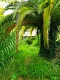 绿色棕榈树 免版税图库摄影