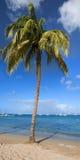 绿色棕榈树 免版税库存图片