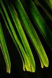 绿色棕榈leavs的剧烈的光和阴影与自然阳光的 免版税库存照片