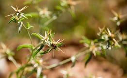 绿色棘手的植物在公园 库存图片