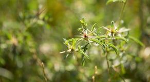 绿色棘手的植物在公园 免版税库存照片