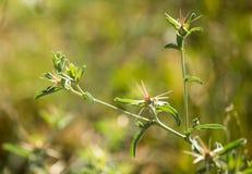 绿色棘手的植物在公园 库存照片