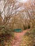 绿色森林公开长凳空的孑然树曲拱秋天冬天 图库摄影
