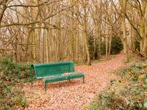 绿色森林公开长凳空的孑然树曲拱秋天冬天 库存图片
