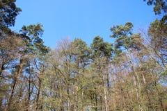 绿色森林厂在春天的发芽年轻叶子 免版税库存照片