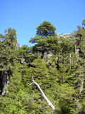 绿色森林和山腰 免版税库存照片
