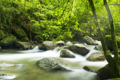 绿色森林和流 免版税库存照片