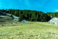 绿色森林在山好日子 免版税库存照片