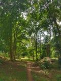 绿色森林在老挝 库存图片
