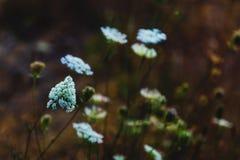 绿色森林地板开花植物生长 图库摄影