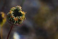 绿色森林地板植物生长 免版税库存照片