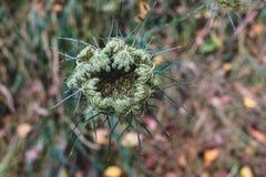 绿色森林地板植物生长 库存图片