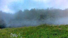 绿色森林的边缘浓雾的 库存照片