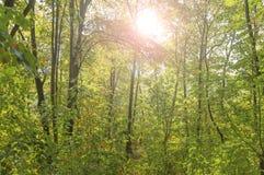绿色森林视图和透镜火光绿化树自然室外公园 免版税图库摄影