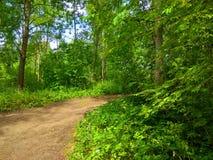 绿色森林足迹照片 库存图片
