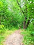 绿色森林足迹照片 免版税图库摄影